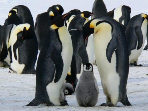 Pinguine in der Unternehmensnachfolge
